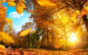 Wetter Schweiz: Goldener Oktober bringt Sommergefühle