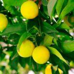 Restaurant Limon – geniessen Sie ein Stück Mittelmeer in St. Gallen