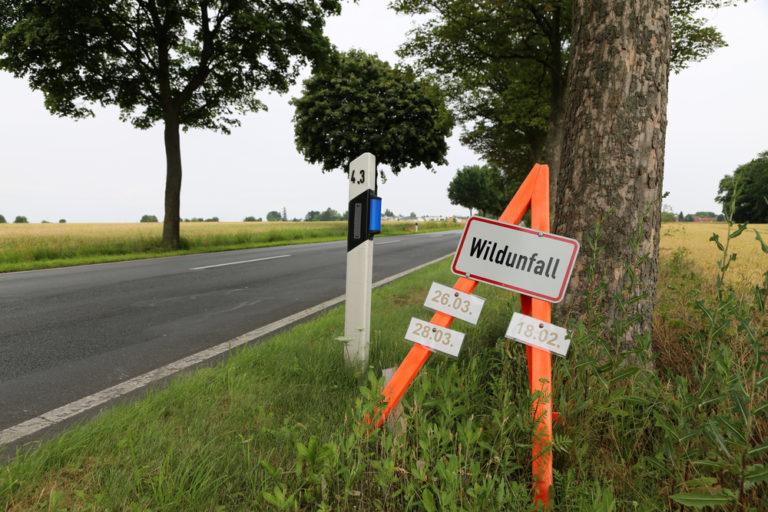 feature post image for Erhöhtes Unfallrisiko für Wildunfälle in der dunklen Jahreszeit