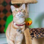 In die Ferien ohne Katze? Im Cat Garden ist Ihr Liebling bestens aufgehoben!