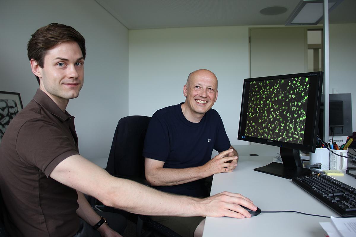 Ferdinand Zettl und Gert Zimmer vom IVI vor einer Aufnahme des von ihnen entwickelten Tests mit grün fluoreszierenden Zellen. (Bild: © BLV/Renate Boss)