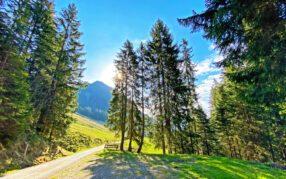 Wetter Schweiz: Nochmals örtlich bis über 30 Grad