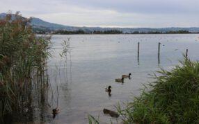 Oktoberwetter 2020: Leicht zu kühl, zu nass und zu bewölkt