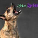 Pfötli-Egge: Tiernahrung und Zubehör - BARF und mehr für einen glücklichen Hund