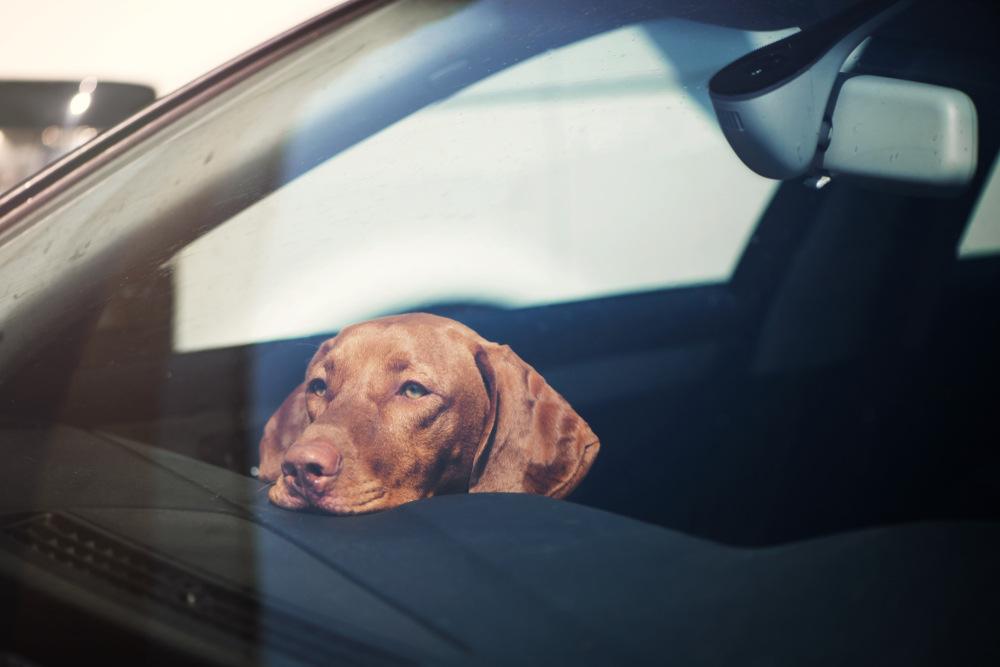 Hund in Auto eingeschlossen